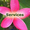Island Organizers' services